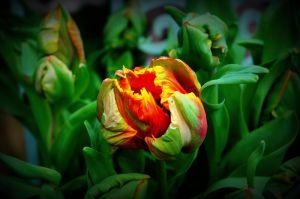 nature_photography_healdsburg_flower1.jpg