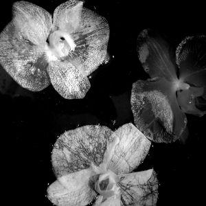 nature_photography_healdsburg_flower2.jpg