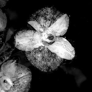 nature_photography_healdsburg_flower4.jpg