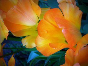 nature_photography_healdsburg_flower6.jpg