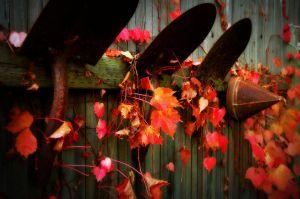 nature_photography_healdsburg_garden1.jpg