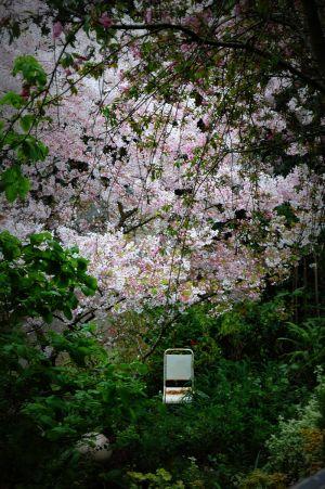 nature_photography_healdsburg_garden2.jpg
