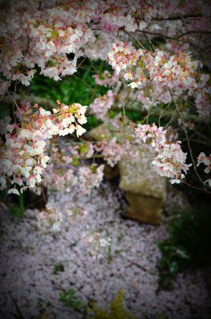 nature_photography_healdsburg_garden4.jpg