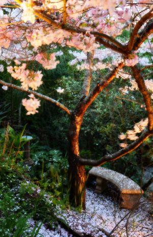 nature_photography_healdsburg_garden7.jpg