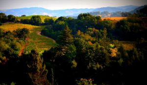nature_photography_healdsburg_sonoma_county4.jpg