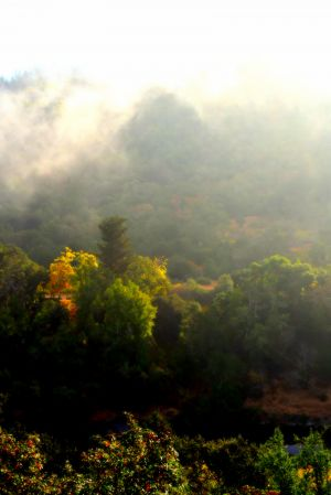 nature_photography_healdsburg_sonoma_county5.jpg