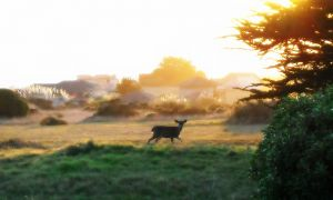 nature_photography_healdsburg_coast1.jpg