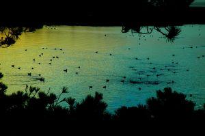 nature_photography_healdsburg_coast8.jpg