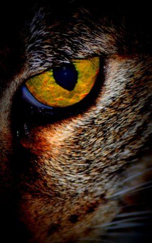 nature_photography_healdsburg_cat1.jpg