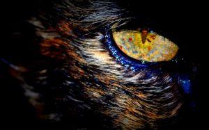 nature_photography_healdsburg_cat2.jpg