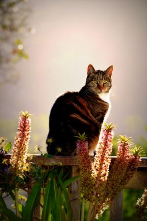 nature_photography_healdsburg_cat3.jpg