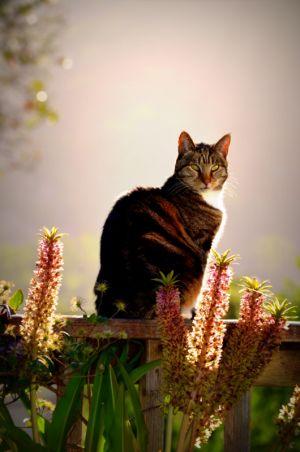 nature_photography_healdsburg_cat3.jpg