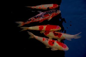 nature_photography_healdsburg_fish.jpg