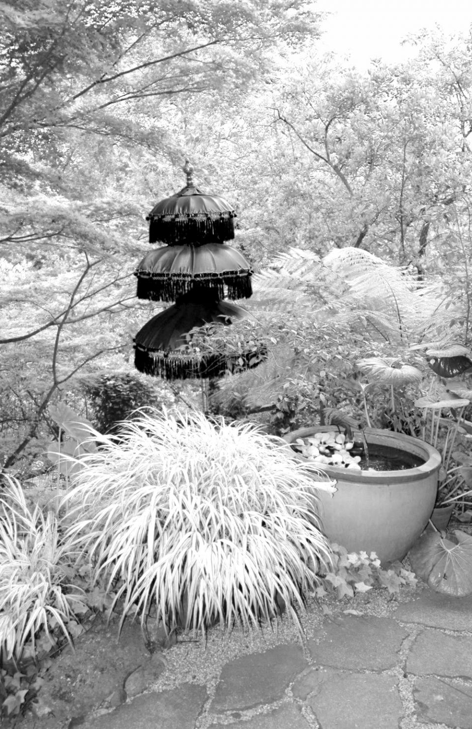 nature_photography_healdsburg_bw_garden1.jpg