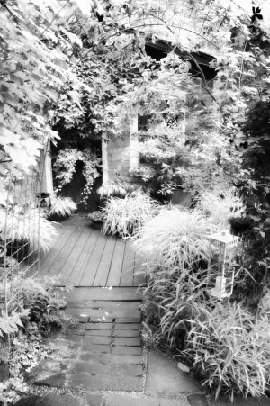 nature_photography_healdsburg_bw_garden2.jpg