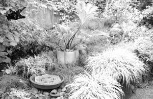 nature_photography_healdsburg_bw_garden3.jpg