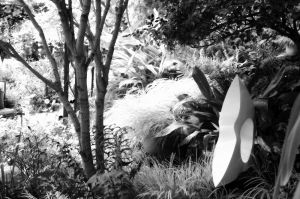 nature_photography_healdsburg_bw_garden6.jpg
