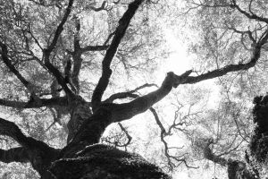 nature_photography_healdsburg_bw3..jpg