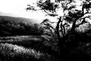nature_photography_healdsburg_bw6..jpg